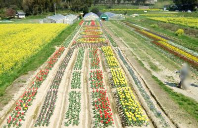 正助村花畑