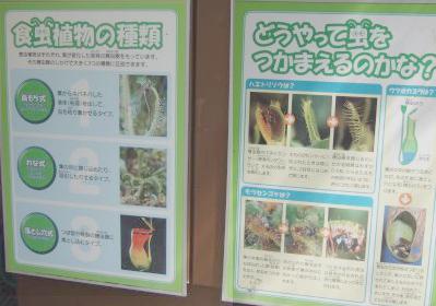 食虫植物看板
