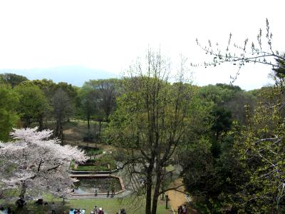 植物園展望台より油山