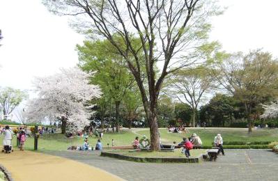 植物園芝生広場ランチ