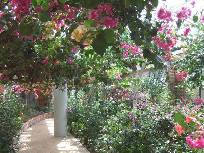 植物園ブーゲンビリアの室