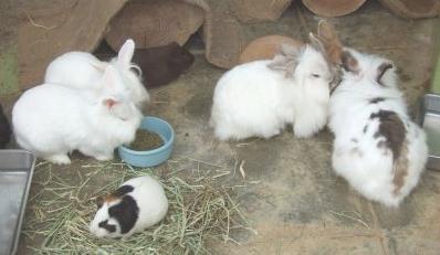 動物園ウサギ
