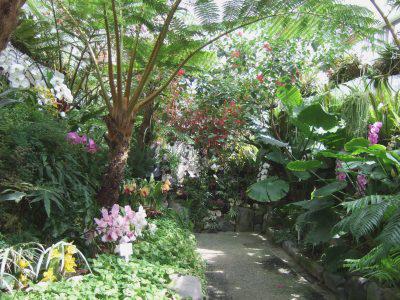 植物園ランの室