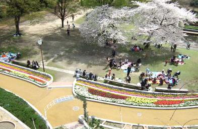 植物園芝生の