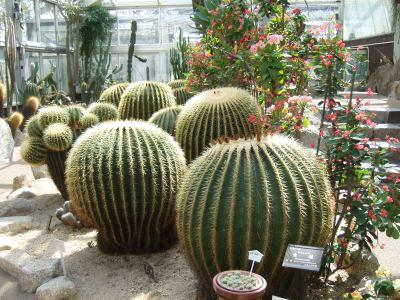 植物園サボテン