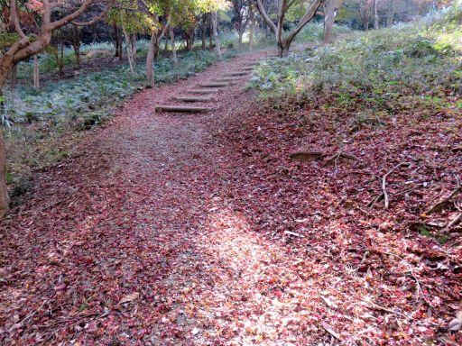 ふれあいの森紅葉落ち葉_512