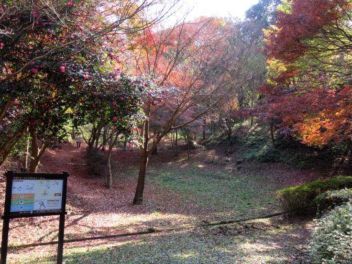 ふれあいの森紅葉の森1_512
