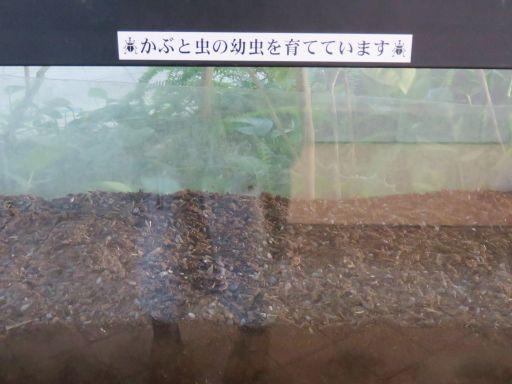 カブトムシの幼虫(ぐりんぐりん)_512