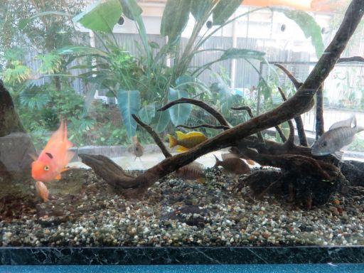 グリングリン熱帯魚1_512