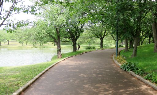 駕与丁公園森林浴_512
