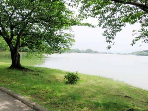 駕与丁公園森と池_512