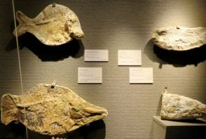 アマゾン展魚化石_512