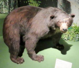 アマゾン展熊_512